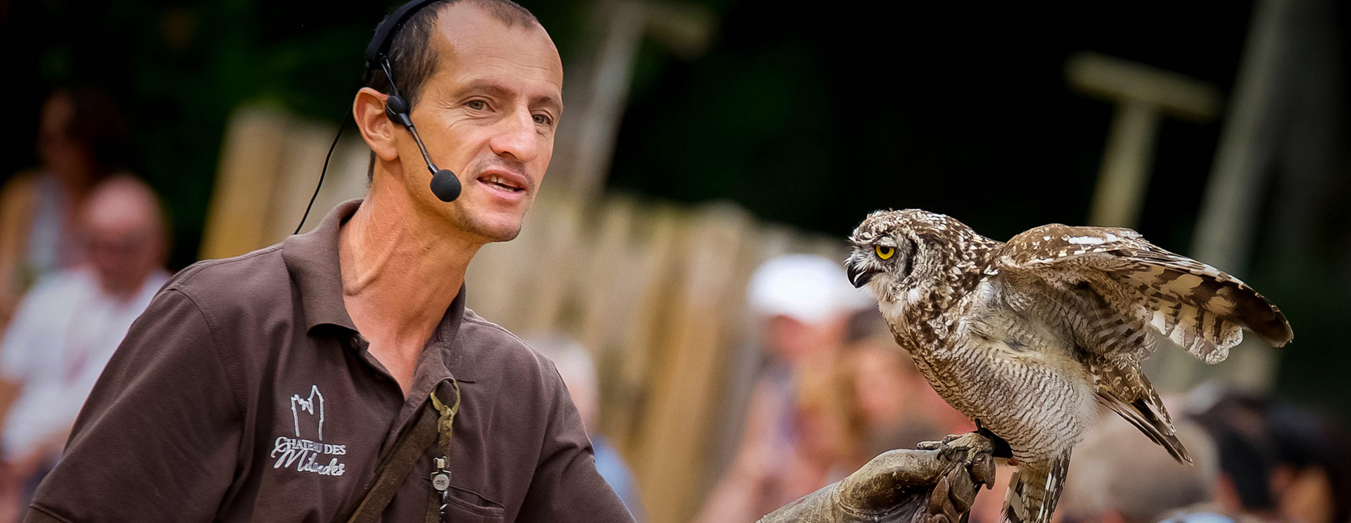 Birds of Prey Display - A fun presentation of protected species
